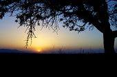Silhouette of trees at sunset, Zaragoza Province, Aragon, Spain.