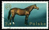 Vintage  Postage Stamp. Arabian Stallion.