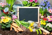 stock photo of plant pot  - Gardening tools and flowers in the garden - JPG