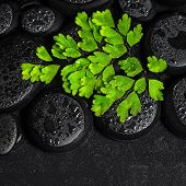 Beautiful Spa Concept Of Green Twig Adiantum Fern On Zen Basalt Stones With Dew In Water, Closeup