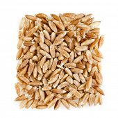 Portion of Spelt Close up top view surface isolated on white background