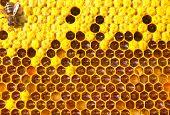 Bee, Honey, Nectar And Pollen