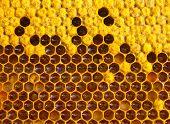Honey, Nectar And Pollen