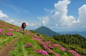 Trekker Walking Flowers Field In Mountain