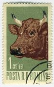 Stamp With Bull