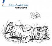 kitten sketch - hand-drawn illustration