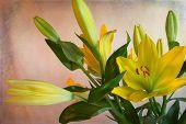 Bloomin' Yellow