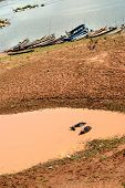 image of wallow  - Buffalo relaxing in a mud wallow Near the Mekong River Buffalo bath in water canal - JPG