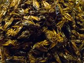 Crispy fried insects  are regional delicacies in many Asian countries like Thailand.