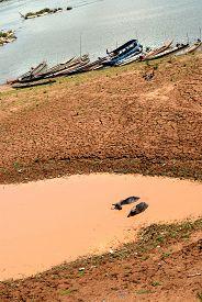 stock photo of wallow  - Buffalo relaxing in a mud wallow Near the Mekong River Buffalo bath in water canal - JPG