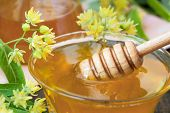 picture of linden-tree  - Lime honey with fresh linden flowers close up  - JPG