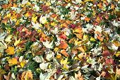 Floor Of Fallen Leaves