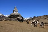 picture of yaks  - Yak herd carrying goods and stupa - JPG