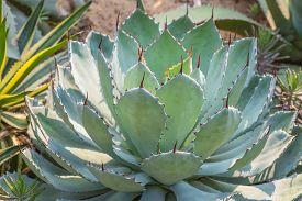 foto of spiky plants  - Macro of succulent plant in the desert - JPG