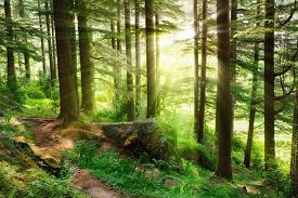 foto of ecosystem  - Sun rays illuminating a misty forest scenery with fresh and vibrant green foliage and a footpath - JPG