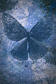 Grunge blue textured backgriund with butterfly