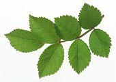 Meer groen blad