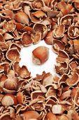 whole hazelnut surrounded by shells
