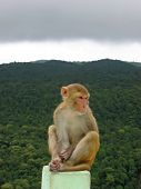 Monkey Sitting On A Rock