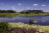 Wetlands Morning