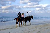 Horses In A Tropical Beach