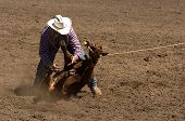 Calf Roper Makes A Tie