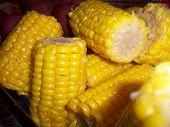 Corn Anyone?