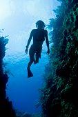 Carribean Freediver