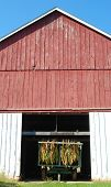 stock photo of tobacco barn  - A wooden red tobacco barn has bundles of tobacco drying inside - JPG