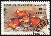 Grammangis Fallax