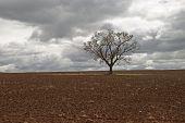 Entwicklung des ländlichen