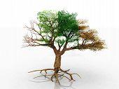 el árbol de cuatro estaciones