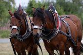 Ardennes Horse Team