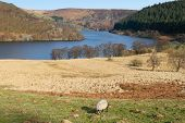 Penygarreg Reservoir, Elan Valley Wales Uk.