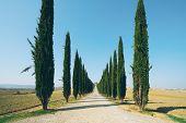 Постер, плакат: Tuscany Landscape Of Cypress Trees Road In Italy