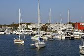 picture of martha  - photo take on marthas vineyard - JPG