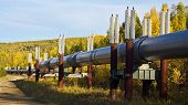 The Trans-alaska Pipeline In Fall