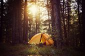View Of Tent On Meadow In Forest At Sunrise. Camping Background. Tourist Tent In Forest With Sunbeam poster