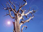 The Rugged Tree