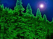 NightSky floresta Iii