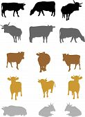 Cows on a white background