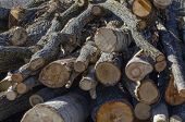 Sawn Trunks Of Aspen And Oak Trees Piled In A Large Pile poster