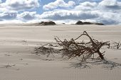 Branches In The Sand Dunes