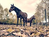 Pony And Horse In Fall Paddock Of Horse Farm.  Animals Between Electrical Fence. poster