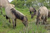 horse in beautiful landscape