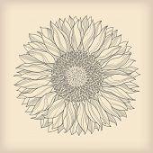 flower vintage retro background - sunflower flower drawn - vector