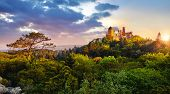 Sintra, Portugal. National park with Palace of Pena. Sunrise among green trees of forest with pine-t poster