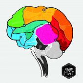Vector Brain Map