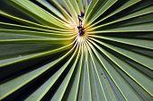 Palm Tree Leave2