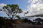 Maui's Jagged Coastline